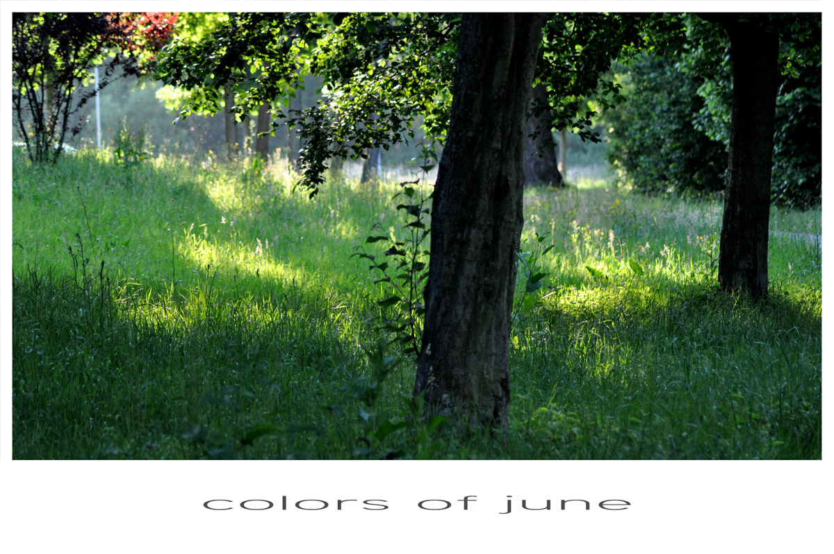 Colors of june